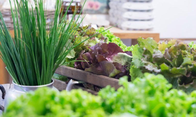 Lisilis Bio-Salat und Bio-Schnittlauch